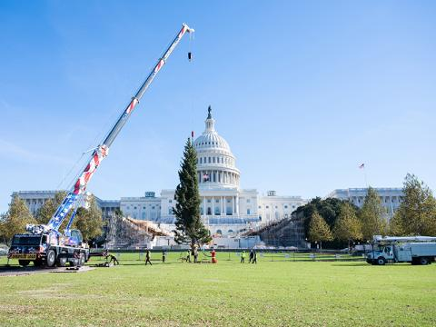 Capitol Christmas Tree Arrives