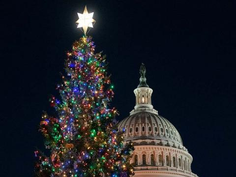 Photo of the Capitol Christmas Tree lit in front of the Capitol building.