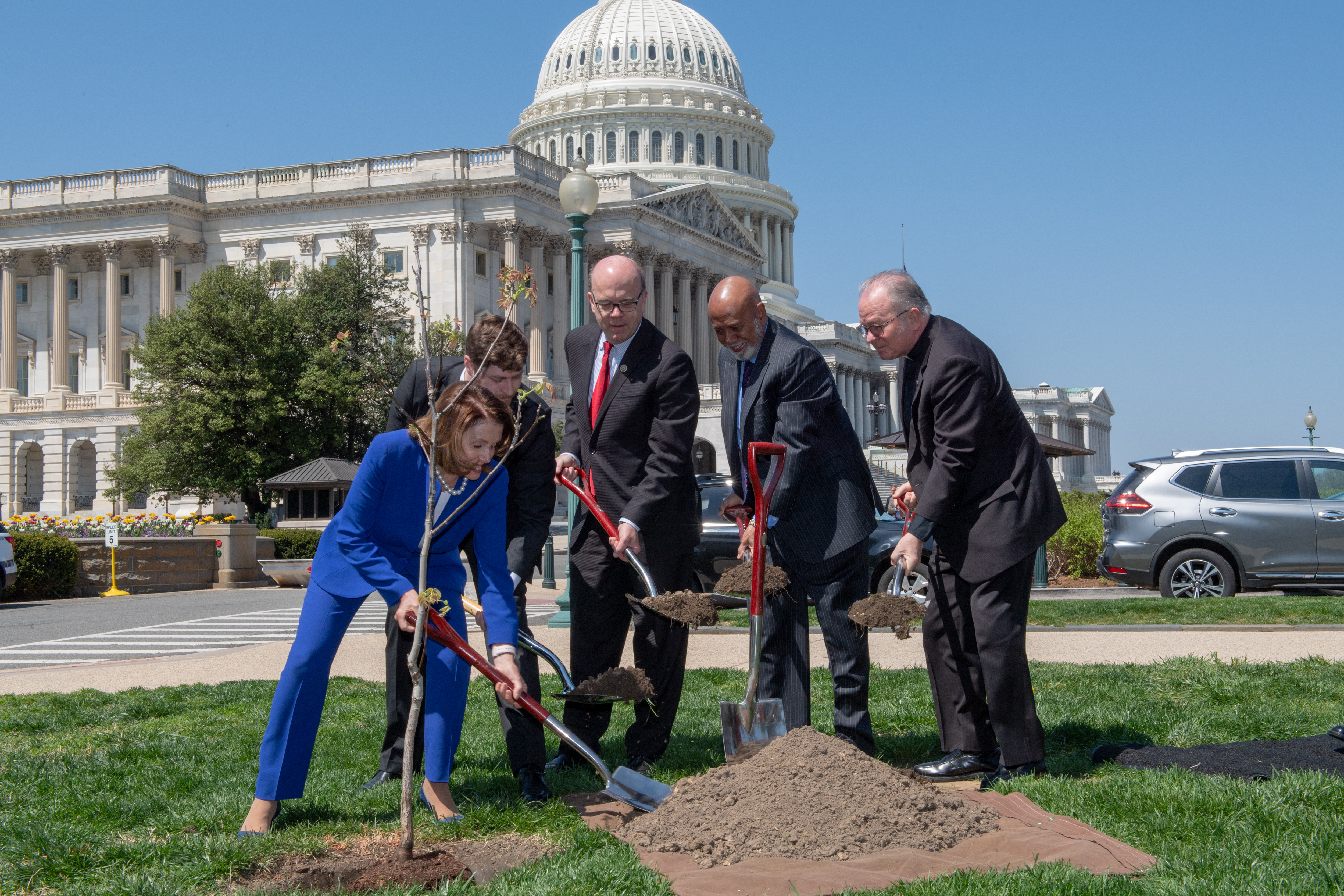A walnut tree planted on the Capitol Grounds in memory of Rep. Slaughter