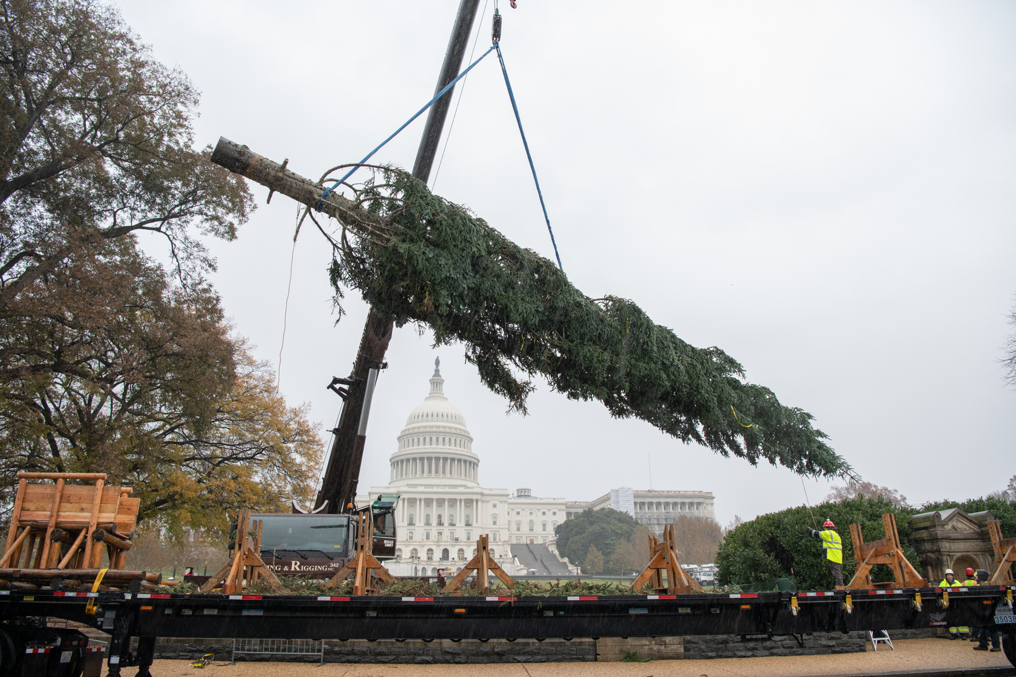 The 80-foot-tall noble fir hoisted into place by a crane on the West Front Lawn of the U.S. Capitol