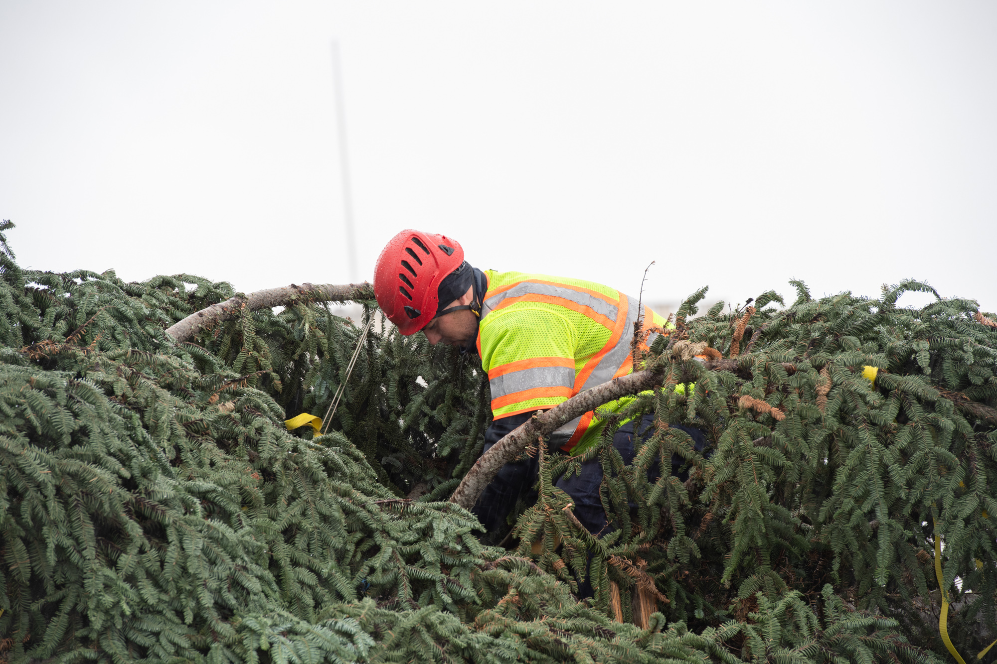 An Architect of the Capitol employee secures the Capitol Christmas Tree