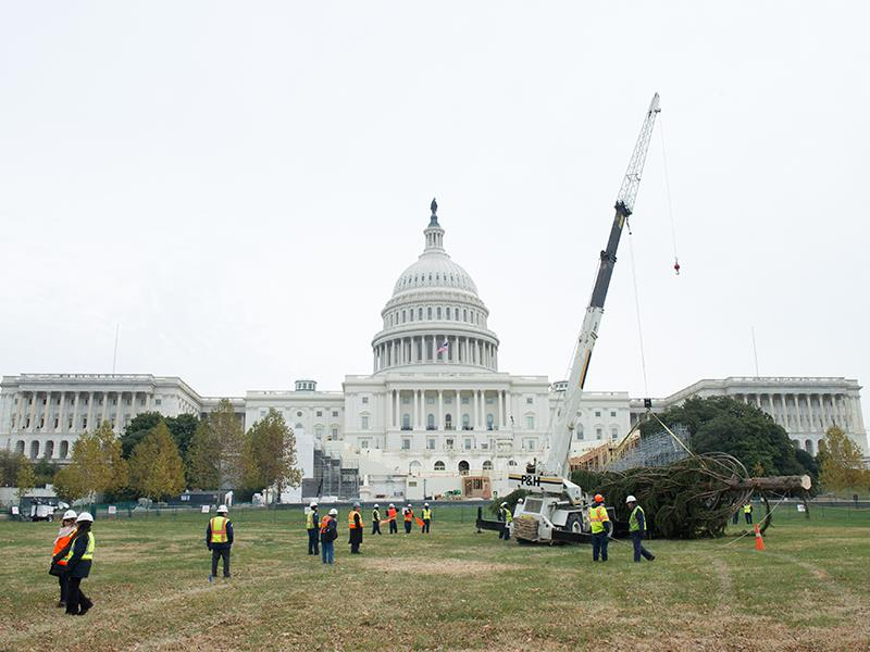 A crane lifting the Capitol Christmas Tree