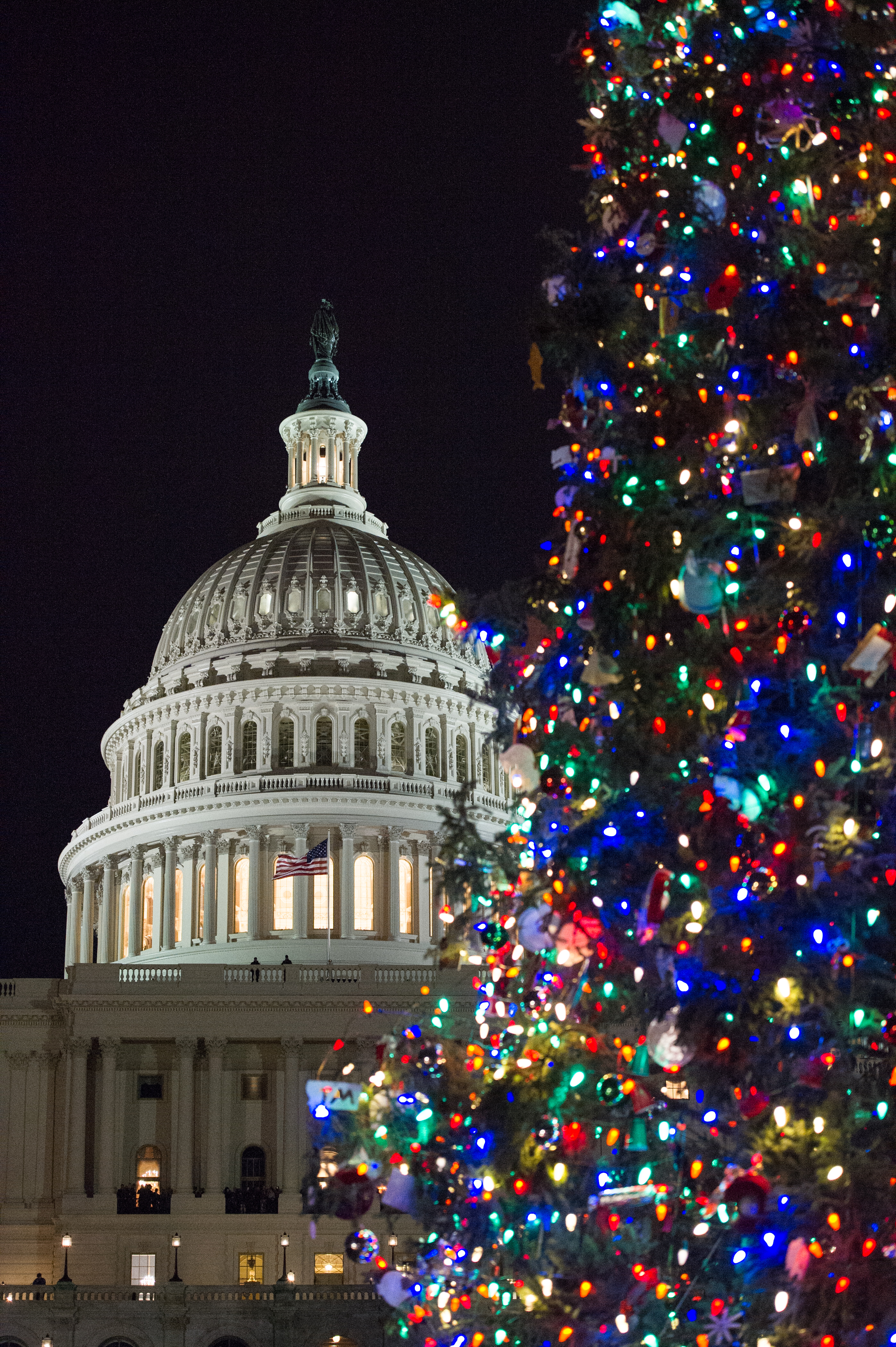 The 2017 Capitol Christmas Tree is a 79-foot-tall Engelmann Spruce from Kootenai National Forest