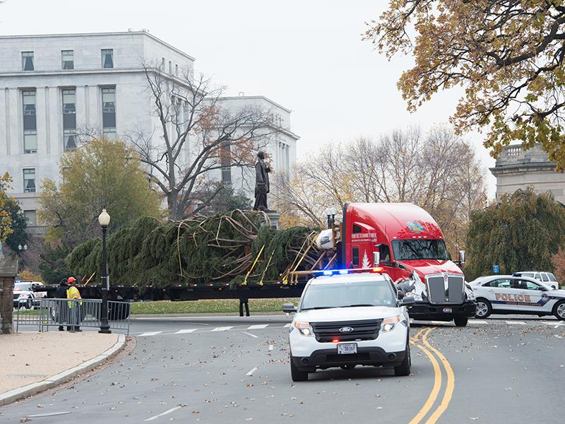 A truck carrying the Capitol Christmas Tree being escorted by a U.S. Capitol Police vehicle