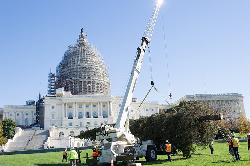 The tree is positioned on the West Front Lawn with the U.S. Capitol in the background.