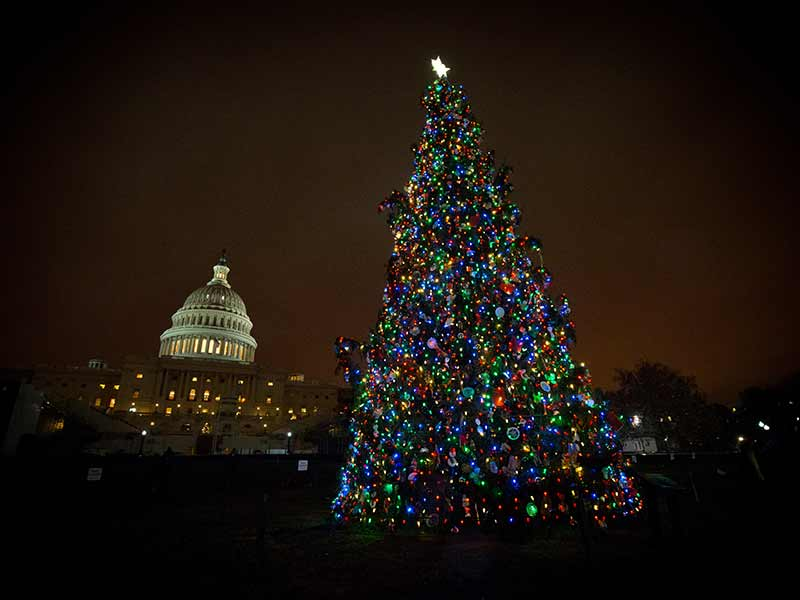 The 2016 Capitol Christmas Tree at night and the U.S. Capitol dome in the background